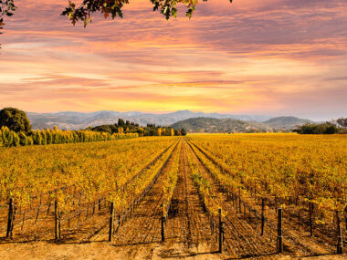Travel blogger, Bella Bucchiotti of xoxoBella, shares about an active vacation in Napa. There are so many outdoor activities in the Napa Valley.