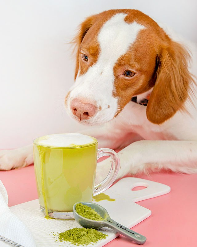 Blogger Bella Bucchiotti of xoxoBella.com shares a recipe for a dairy free green tea matcha latte.