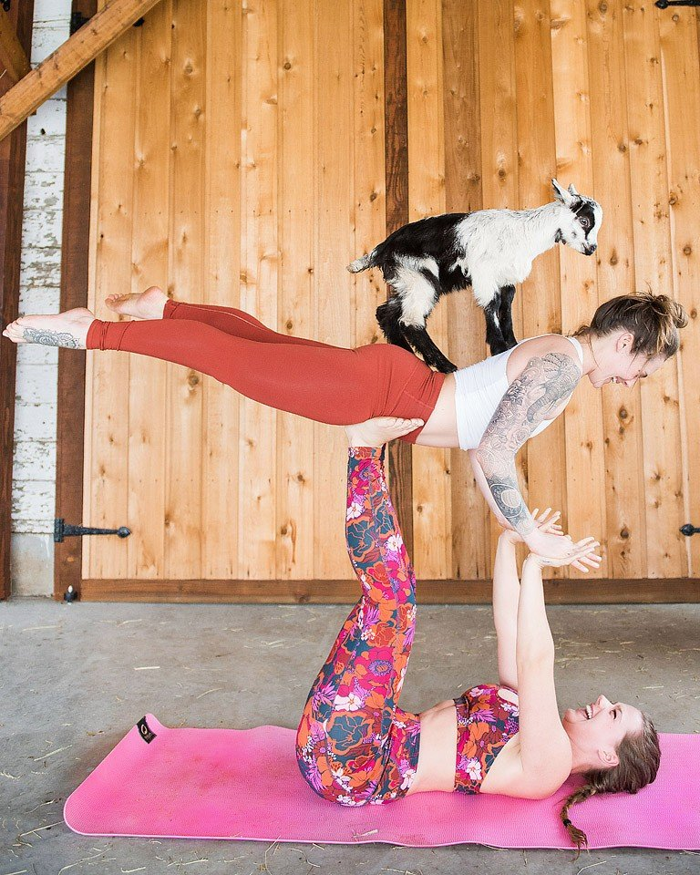 Goat Yoga At Maan Farms Xoxobella
