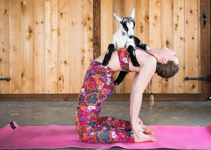 Blogger Bella Bucchiotti of xoxoBella.com shares a goat yoga class at Maan farms in Abbotsford, BC just outside of Vancouver.