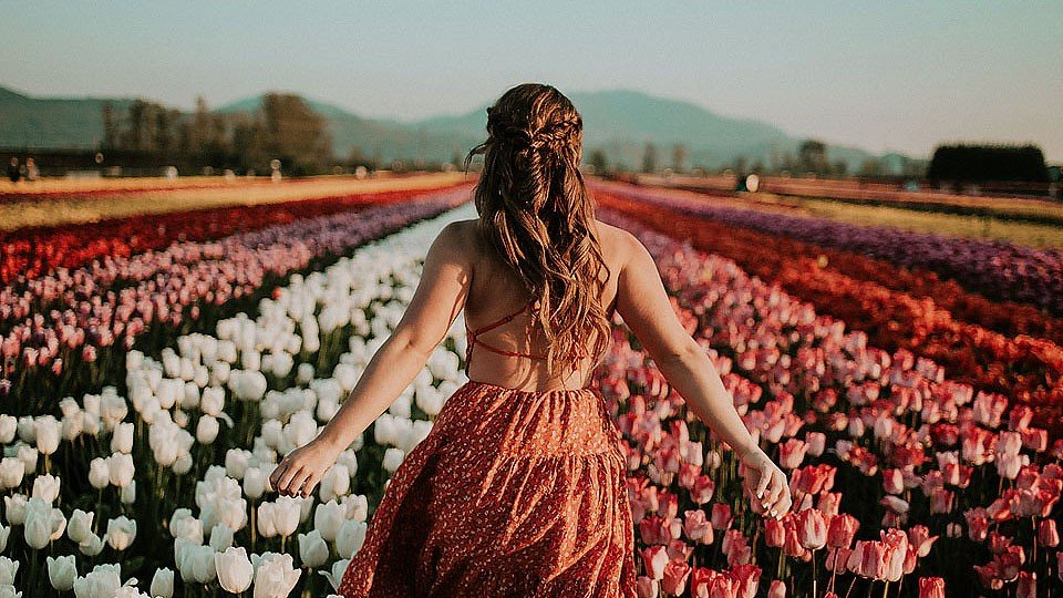 Blogger Bella Bucchiotti of xoxoBella.com shares her time at the tulip festival in Chilliwack, BC and Abbotsford, BC.
