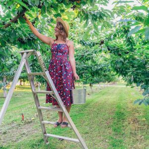 Blogger Bella Bucchiotti of xoxoBella.com shares why she loves cherry season in BC with BC Tree Fruit and a recipe for a cherry hand pie.