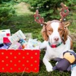Holiday Pet Gift Guide