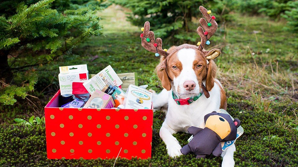 Blogger Bella Bucchiotti of xoxoBella.com shares her pet gift guide with iherb.