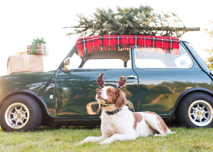 Lifestyle blogger Bella Bucchiotti of xoxoBella shares a pet gift guide with all the things your pets needs this Christmas.