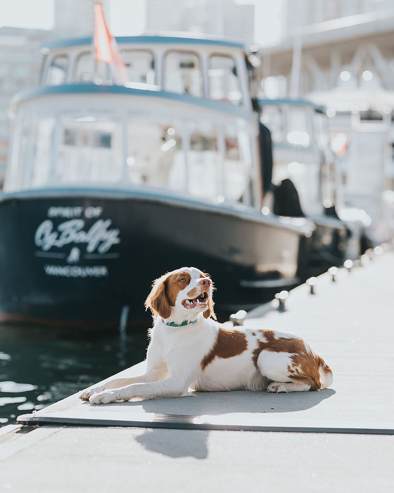 Blogger Bella Bucchiotti of xoxoBella.com shares about her brittany spaniel Beau and why she loves her dog. It was love at first sight with my dog.