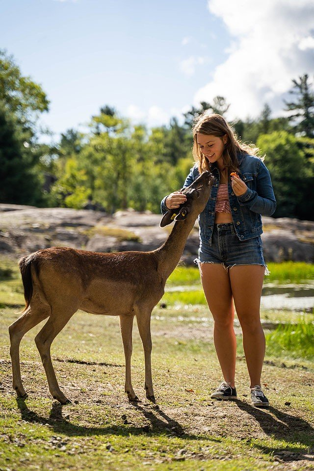 Blogger Bella Bucchiotti of xoxoBella.com shares about her Québec road trip to the Outaouais region of Québec. She enjoyed a stay at the Fairmont Le Château Montebello, dining at Biscotti & Cie and a visit to Parc Omega.