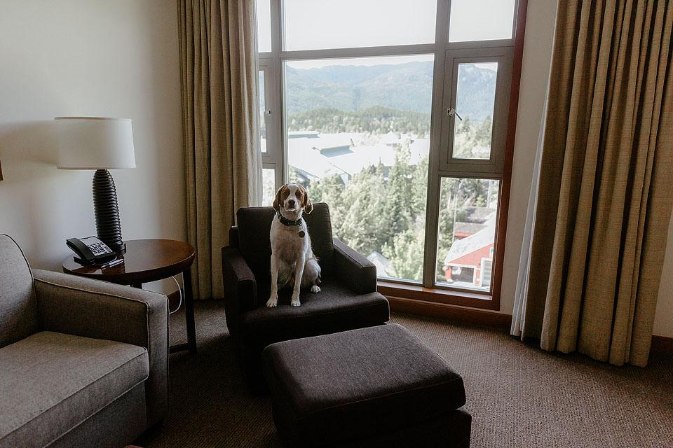 Travel and Lifestyle blogger Bella Bucchiotti of xoxoBella.com shares about her two days in Whistler. She stayed at the Pan Pacific Whistler which is a dog friendly hotel in Whistler Village.
