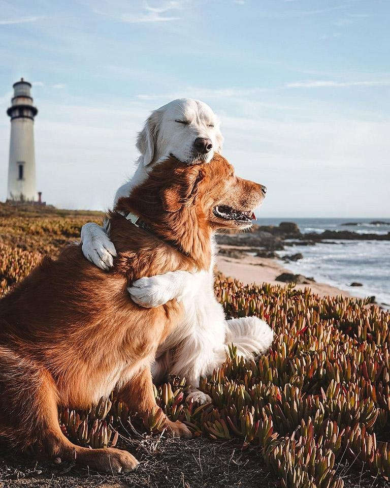 Lifestyle blogger, Bella Bucchiotti of xoxoBella shares about all the dog Instagram accounts that you need to follow. Accounts to follow for the dog lover!