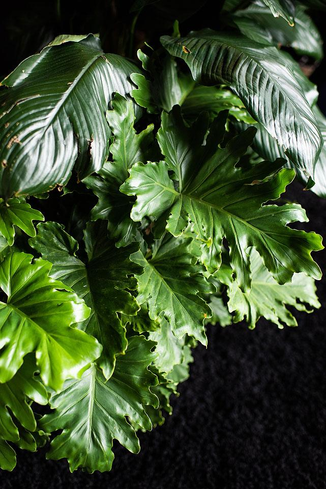 Lifestyle blogger, Bella Bucchiotti of xoxoBella shares her tips and tricks to keep your plants alive.