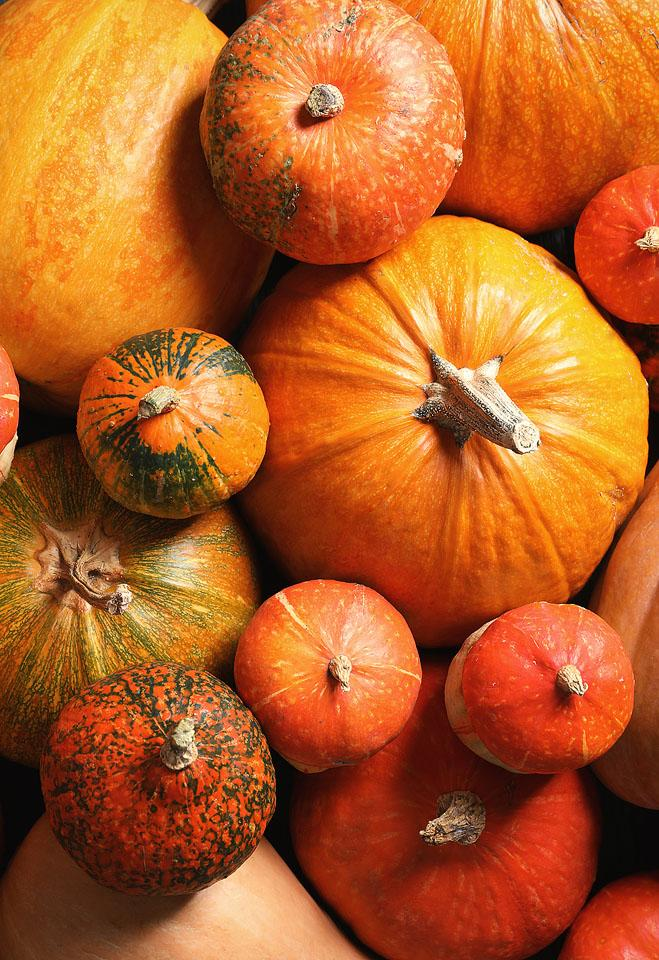Lifestyle blogger, Bella Bucchiotti of xoxoBella, shares the best pumpkin Instagram captions and pumpkin puns for the patch.