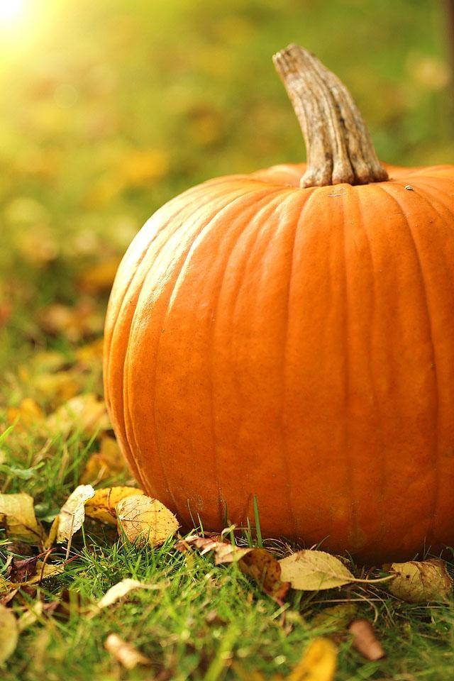 Lifestyle blogger, Bella Bucchiotti of xoxoBella shares the best pumpkin Instagram captions for your pumpkin patch photos.