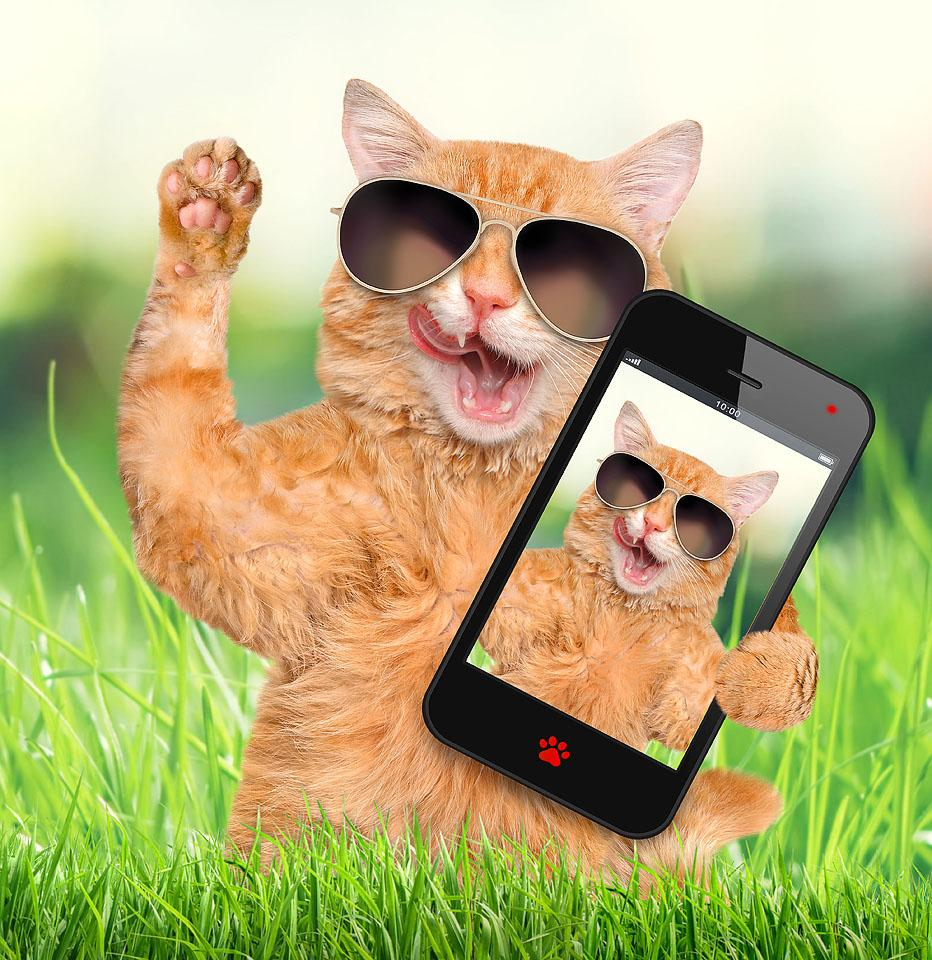 Lifestyle blogger, Bella Bucchiotti of xoxoBella, shares the best cat Instagram captions and kitten puns for all your cat photos.