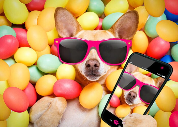 Lifestyle blogger, Bella Bucchiotti of xoxoBella, shares some of the best Easter captions. You will love these caption ideas for Easter photos.