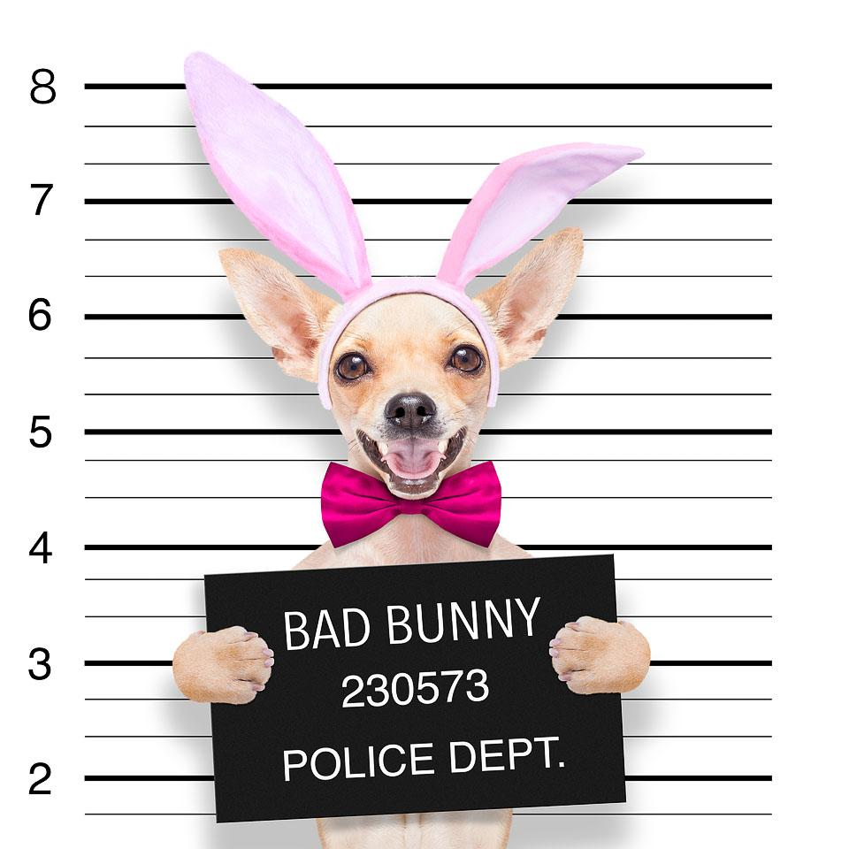 Lifestyle blogger, Bella Bucchiotti of xoxoBella, shares some of the best Easter captions and Easter puns for all your photos and pics.
