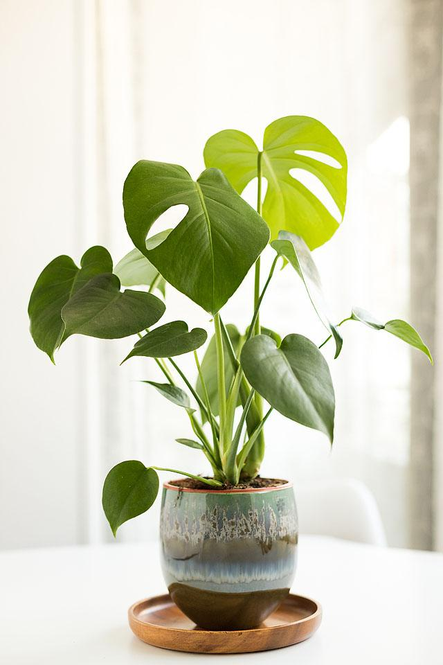 Lifestyle blogger, Bella Bucchiotti of xoxoBella, shares all the things every plant parent knows. If you are keen on plant parenting, you can relate!