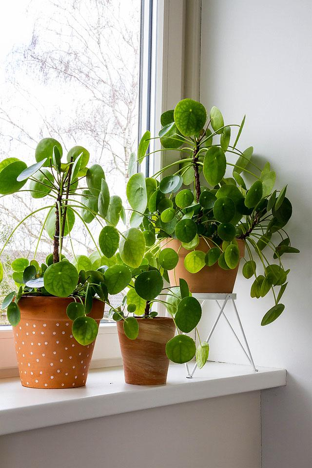 Lifestyle blogger, Bella Bucchiotti of xoxoBella, shares all the things every plant parent knows. Are you plant obsessed, too?