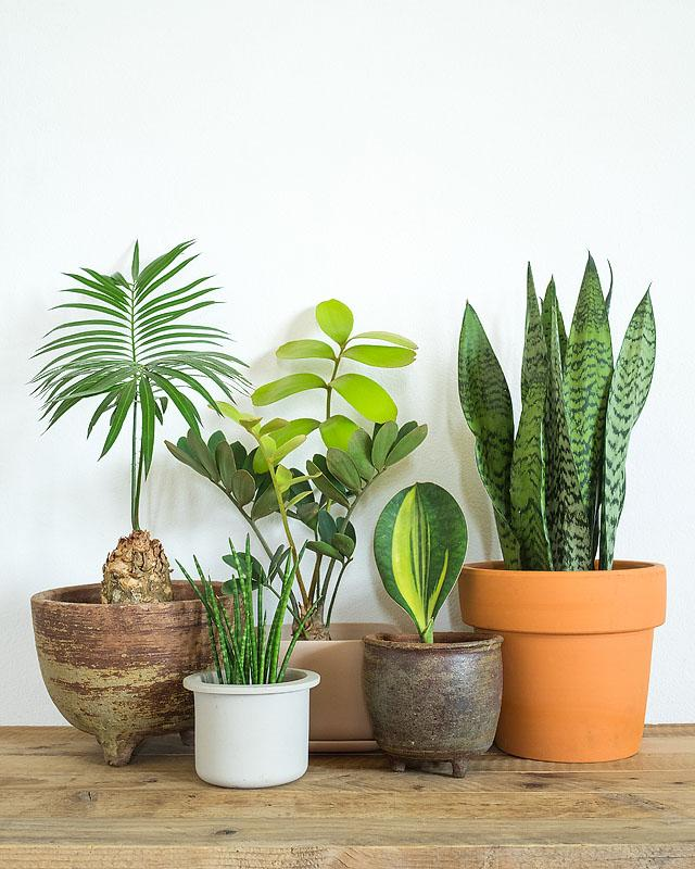 Lifestyle blogger, Bella Bucchiotti of xoxoBella, shares all the things every plant parent knows. If you are obsessed with house plants, you can relate!