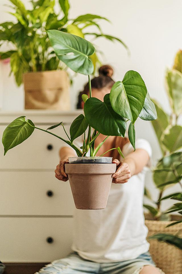 Lifestyle blogger, Bella Bucchiotti of xoxoBella, shares her favourite captions for plant photos and green thumb captions.