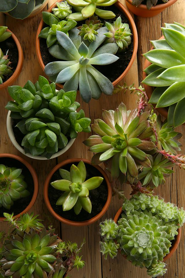 Lifestyle blogger, Bella Bucchiotti of xoxoBella, shares how to keep plants alive when away and leaving potted plants for two weeks.
