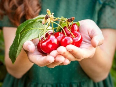 Food blogger, Bella Bucchiotti of xoxoBella, shares about cherry season in BC and WA and a guide to cherries. You will love these tips for picking cherries.