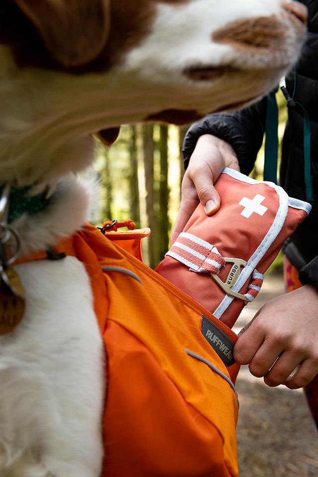 Pet blogger, Bella Bucchiotti of xoxoBella, shares a guide to hiking with pets and hiking safety for dogs.