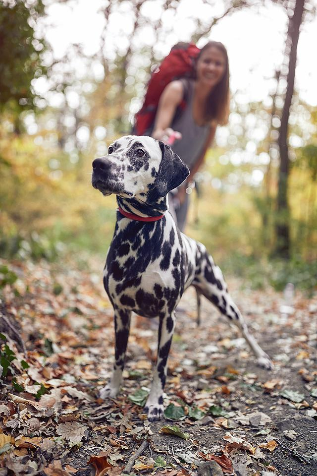 Pet blogger, Bella Bucchiotti of xoxoBella, shares a guide to trekking with your dog and hiking gear for dogs.
