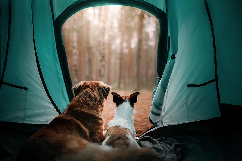 Lifestyle blogger, Bella Bucchiotti of xoxoBella, shares all the best summer camping Instagram captions and puns. You will love these campfire caption ideas and the best camping puns.