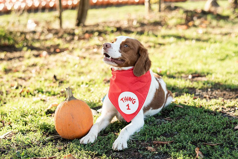 Lifestyle blogger, Bella Bucchiotti of xoxoBella shares dog and owner Halloween costume ideas. These matching dog costumes and pet costumes are too cute!