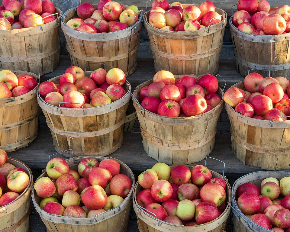Lifestyle blogger, Bella Bucchiotti of xoxoBella shares the best apple captions. You need to use these apple Instagram captions for your next post from the apple orchard.