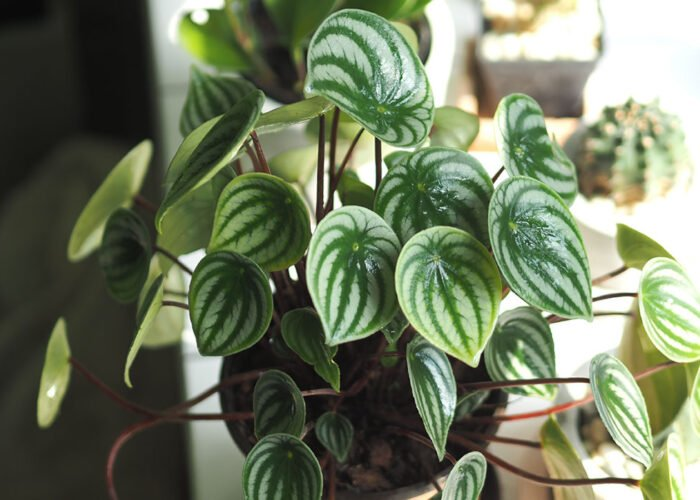 Lifestyle blogger, Bella Bucchiotti of xoxoBella, shares houseplant tips for how to keep your indoor plants alive while on vacation.