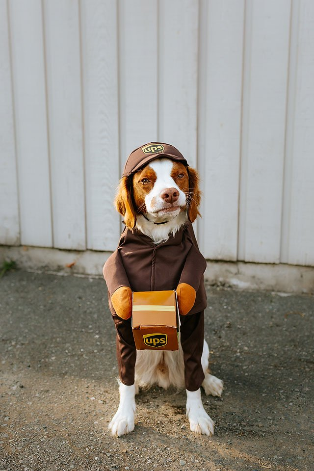 Lifestyle blogger, Bella Bucchiotti of xoxoBella shares dog and owner Halloween costume ideas. The cutest UPS costumes around!
